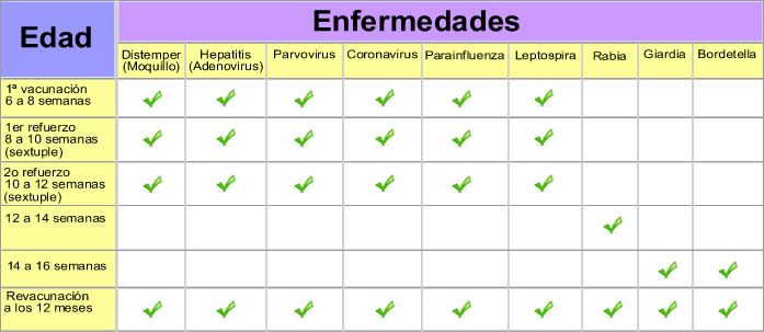 esquema vacunacion animal parvovirus: